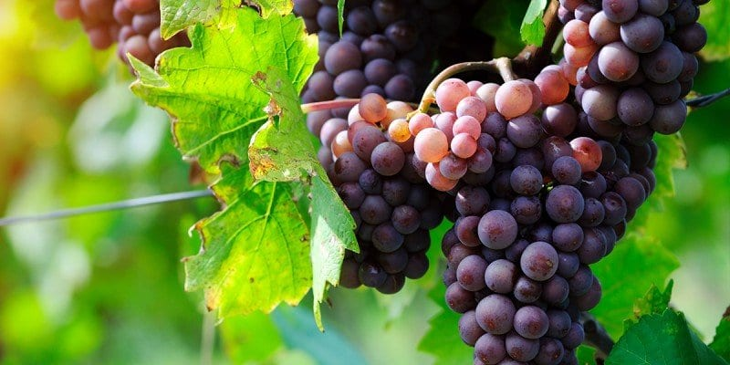 Winery Digital Marketing